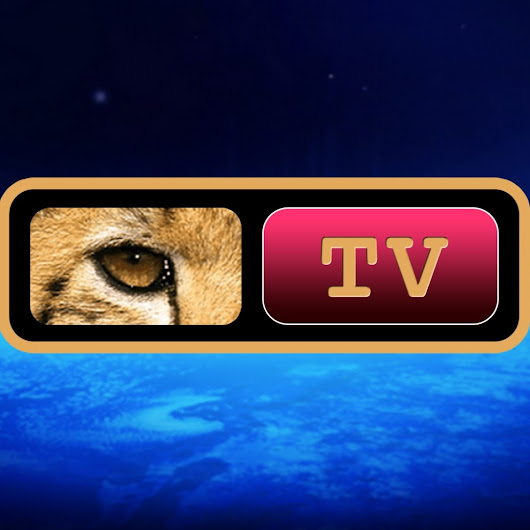 PROJECT CAMELOT TV NETWORK LLC